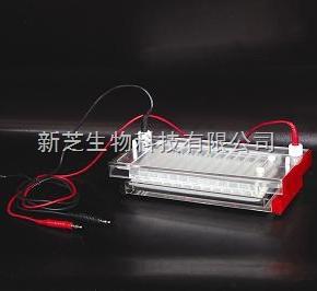 北京六一快速凝胶电泳槽DYCP-44N 快速凝胶电泳槽报价