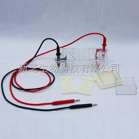 北京六一琼脂糖水平电泳槽DYCP-31BN/水平电泳槽/编号:122-3122现货