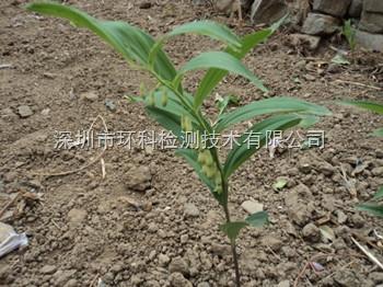 植物中根系活力检测