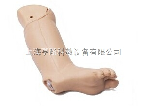 婴儿IO 腿模型
