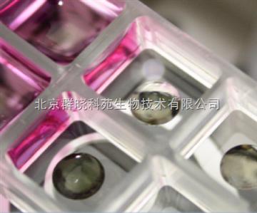 3D细胞水凝胶(3D life hydrogel)