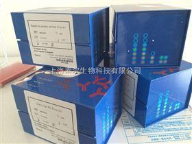 大鼠基质金属蛋白酶1(mmp-1)Elisa试剂盒