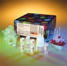 大鼠前列环素(PGI2) ELISA试剂盒精灵敏度高,提供技术指导,免除您的实验后顾之忧