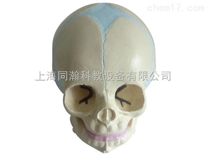 tah/11115-同瀚婴儿头颅骨模型