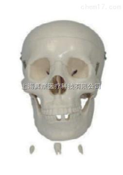 自然大头骨模型(人体骨骼)