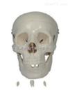 ZK-XC104自然大头骨模型(人体骨骼)