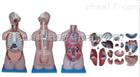 无性躯干模型躯干(肌肉骨骼)