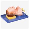 TK/15苏州同科新生儿气管插管模型