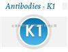 K1-1502抗dsRNA的单克隆抗体-K1抗体